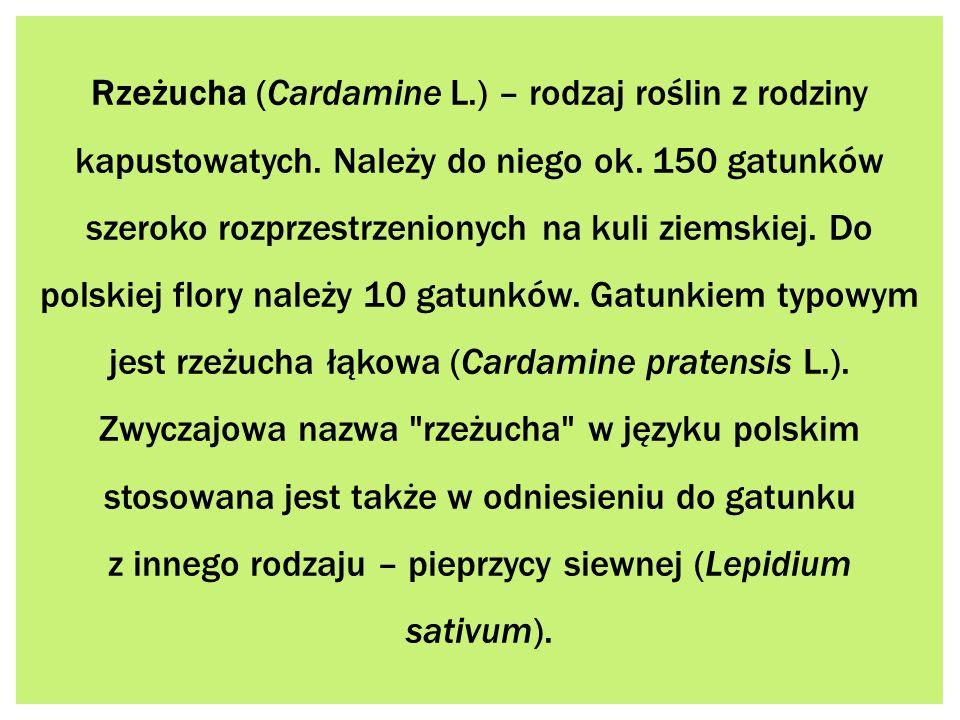 z innego rodzaju – pieprzycy siewnej (Lepidium sativum).