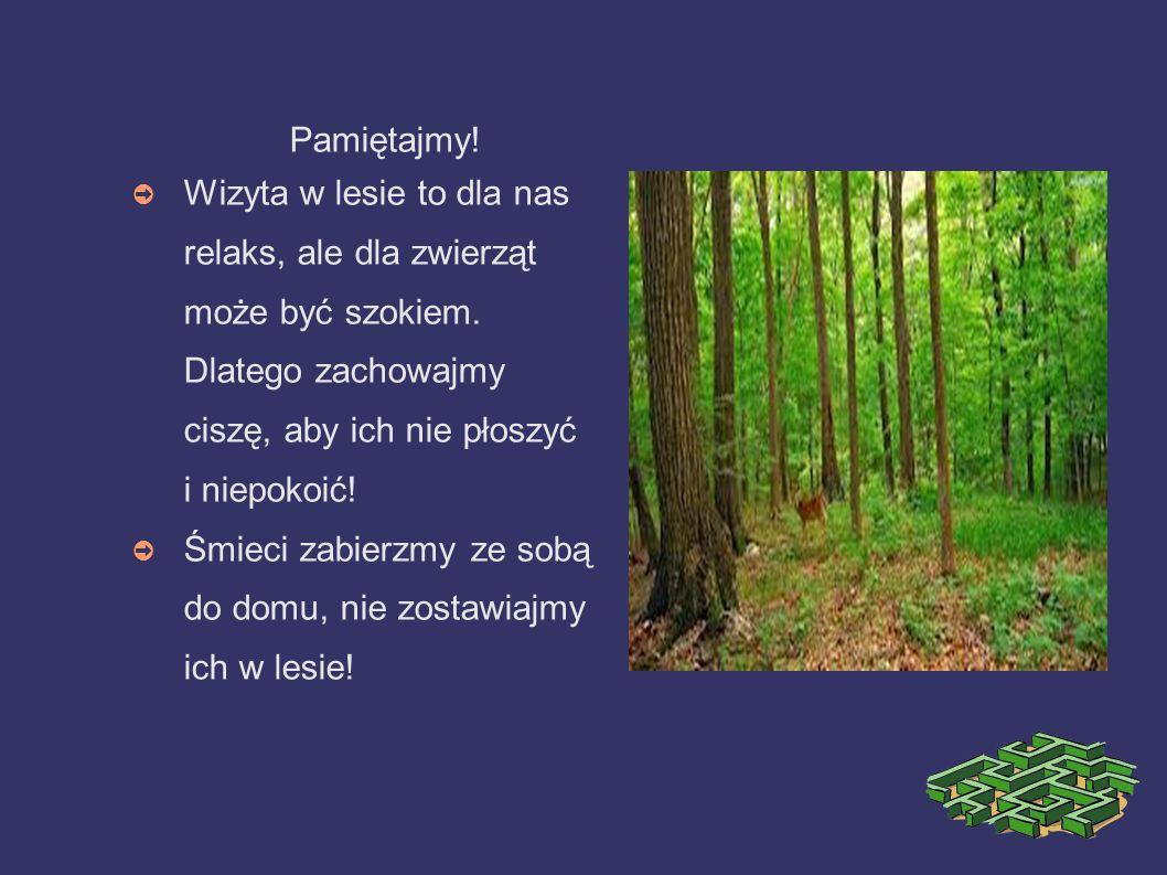 Pamiętajmy!Wizyta w lesie to dla nas relaks, ale dla zwierząt może być szokiem. Dlatego zachowajmy ciszę, aby ich nie płoszyć i niepokoić!