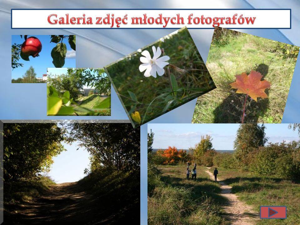 Galeria zdjęć młodych fotografów