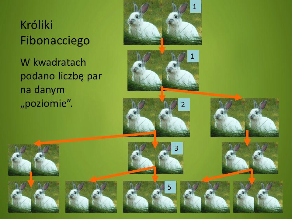 """1 Króliki Fibonacciego W kwadratach podano liczbę par na danym """"poziomie . 1 2 3 5"""