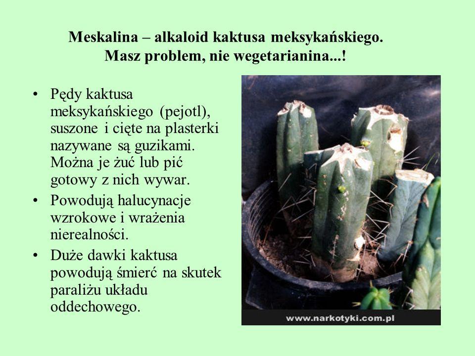 Meskalina – alkaloid kaktusa meksykańskiego