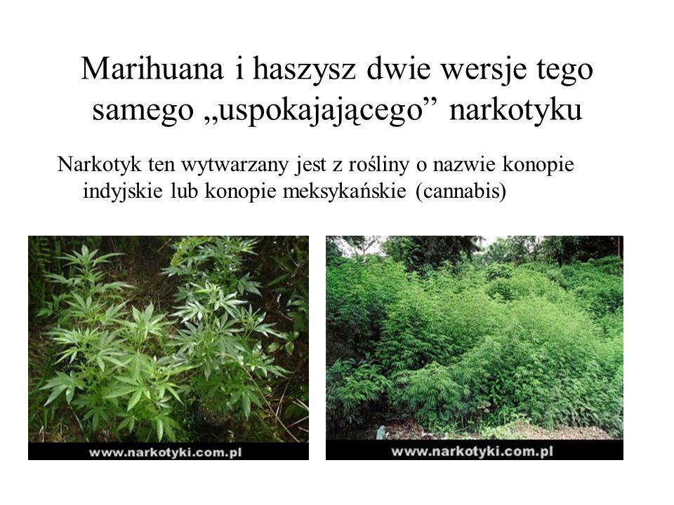 """Marihuana i haszysz dwie wersje tego samego """"uspokajającego narkotyku"""