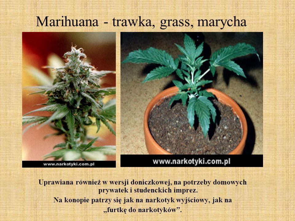 Marihuana - trawka, grass, marycha