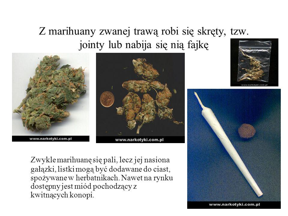 Z marihuany zwanej trawą robi się skręty, tzw