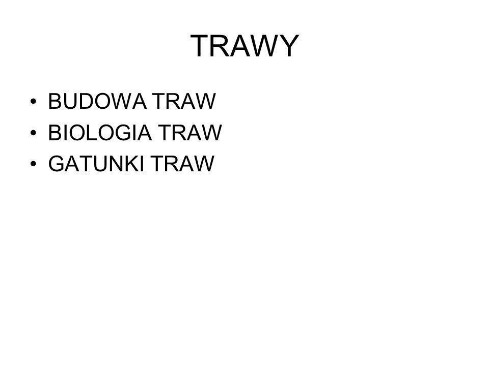 TRAWY BUDOWA TRAW BIOLOGIA TRAW GATUNKI TRAW