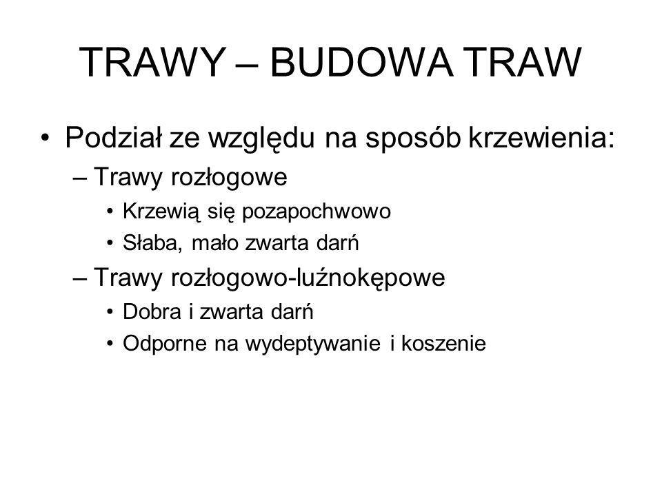 TRAWY – BUDOWA TRAW Podział ze względu na sposób krzewienia: