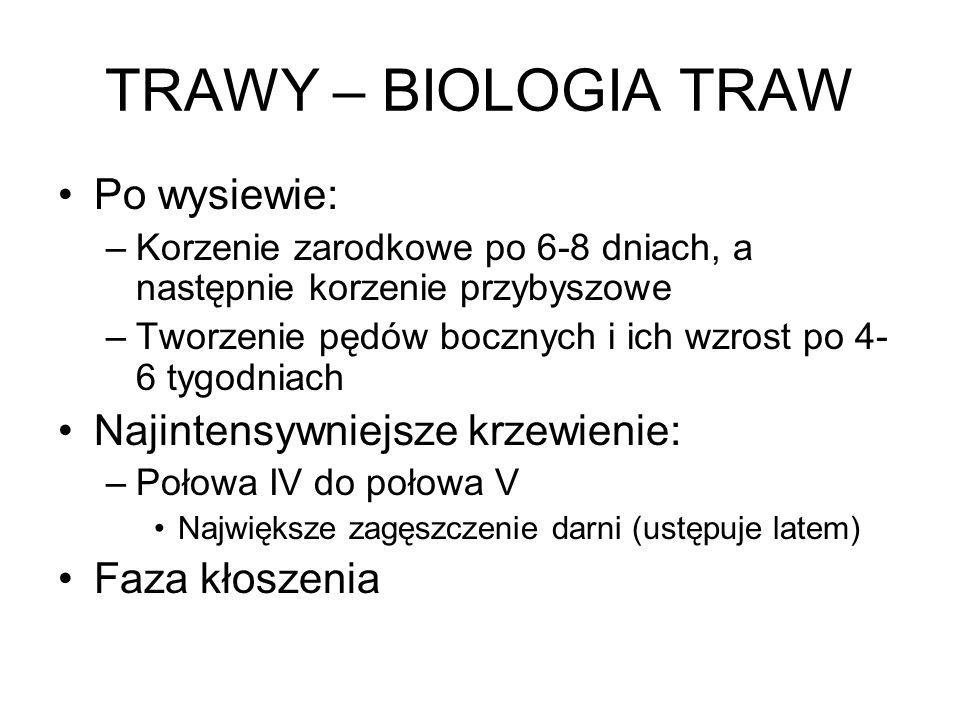 TRAWY – BIOLOGIA TRAW Po wysiewie: Najintensywniejsze krzewienie: