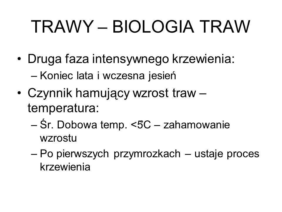 TRAWY – BIOLOGIA TRAW Druga faza intensywnego krzewienia: