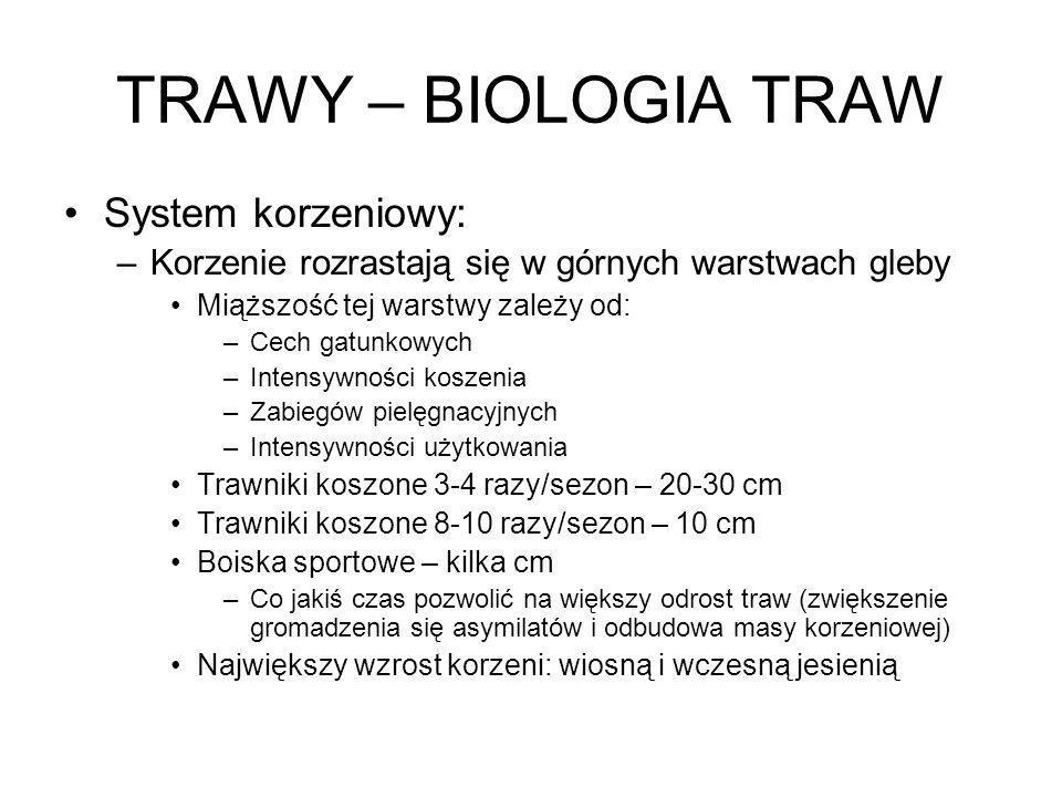 TRAWY – BIOLOGIA TRAW System korzeniowy: