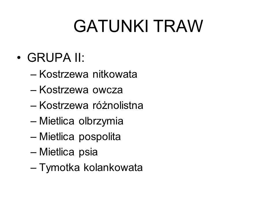 GATUNKI TRAW GRUPA II: Kostrzewa nitkowata Kostrzewa owcza