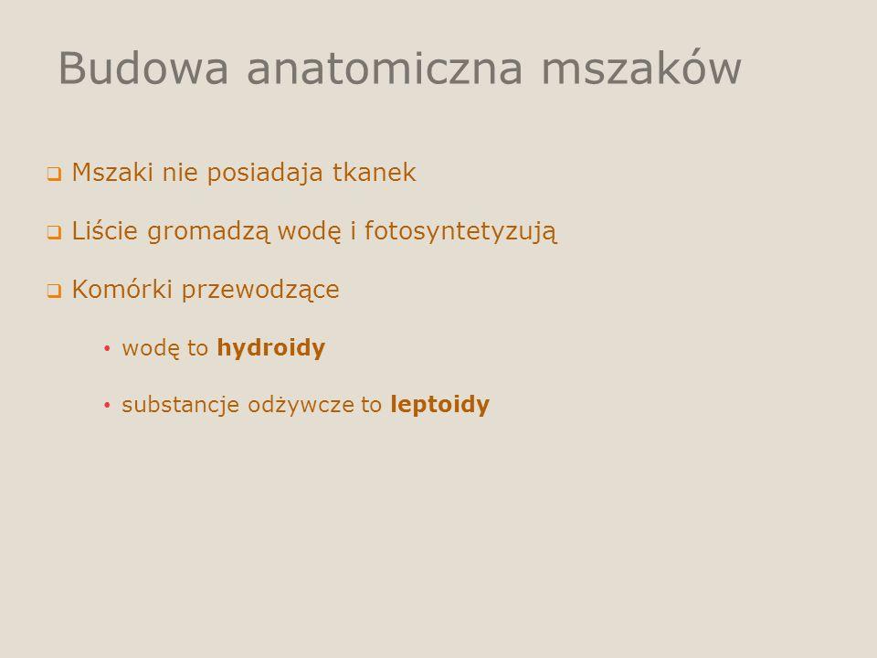 Budowa anatomiczna mszaków