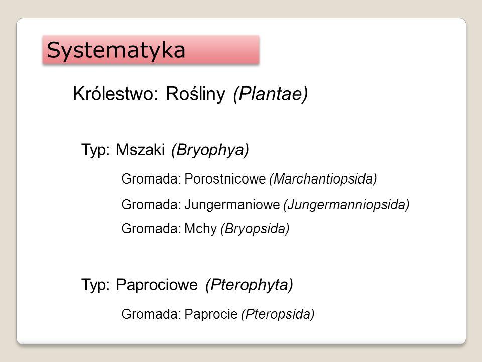 Systematyka Królestwo: Rośliny (Plantae) Typ: Mszaki (Bryophya)