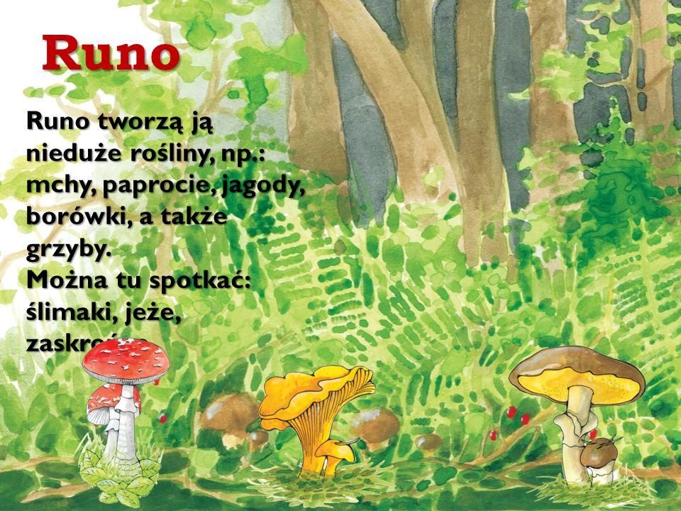 Runo Runo tworzą ją nieduże rośliny, np.: mchy, paprocie, jagody, borówki, a także grzyby.