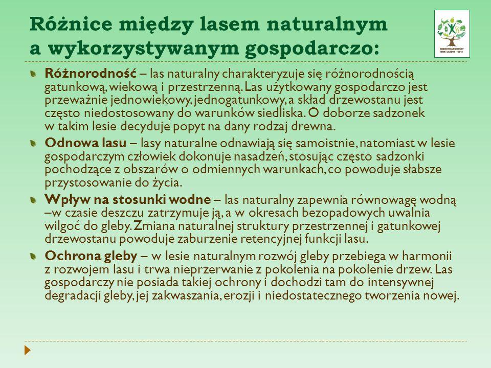Różnice między lasem naturalnym a wykorzystywanym gospodarczo: