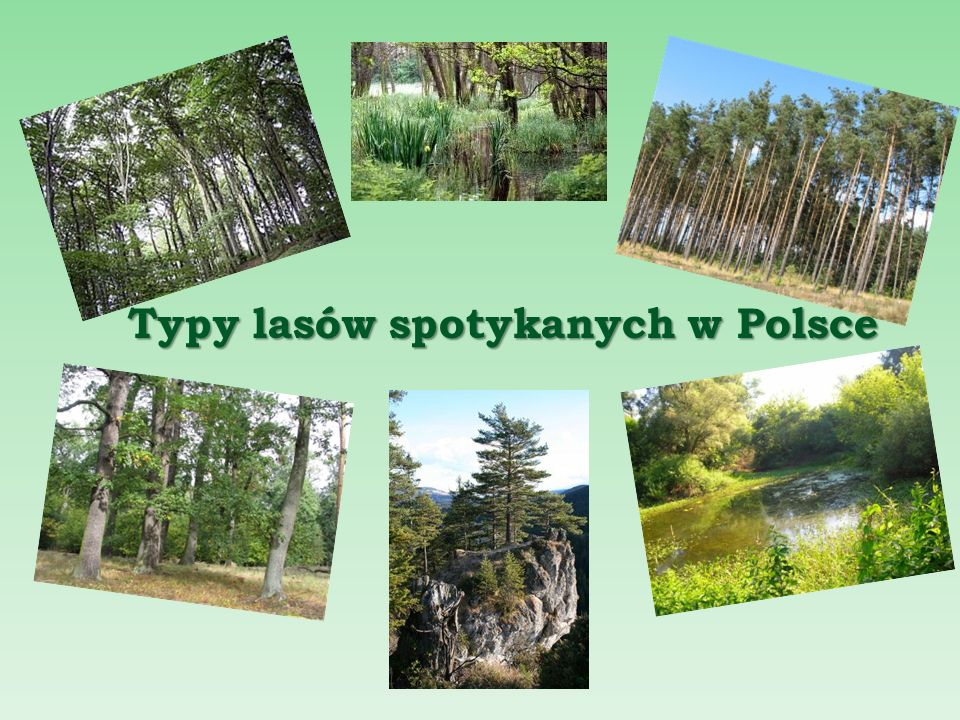 Typy lasów spotykanych w Polsce