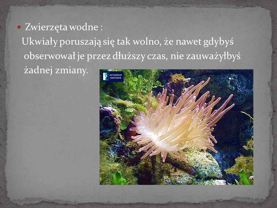 Zwierzęta wodne :Ukwiały poruszają się tak wolno, że nawet gdybyś. obserwował je przez dłuższy czas, nie zauważyłbyś.