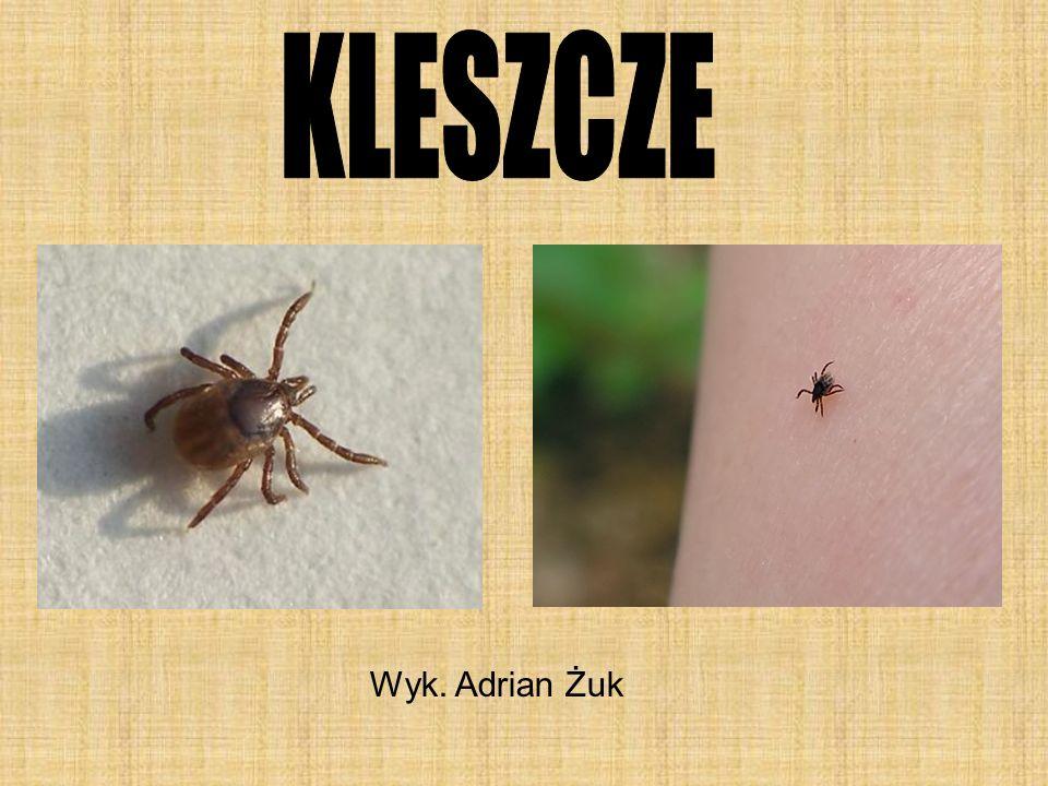 KLESZCZE Wyk. Adrian Żuk