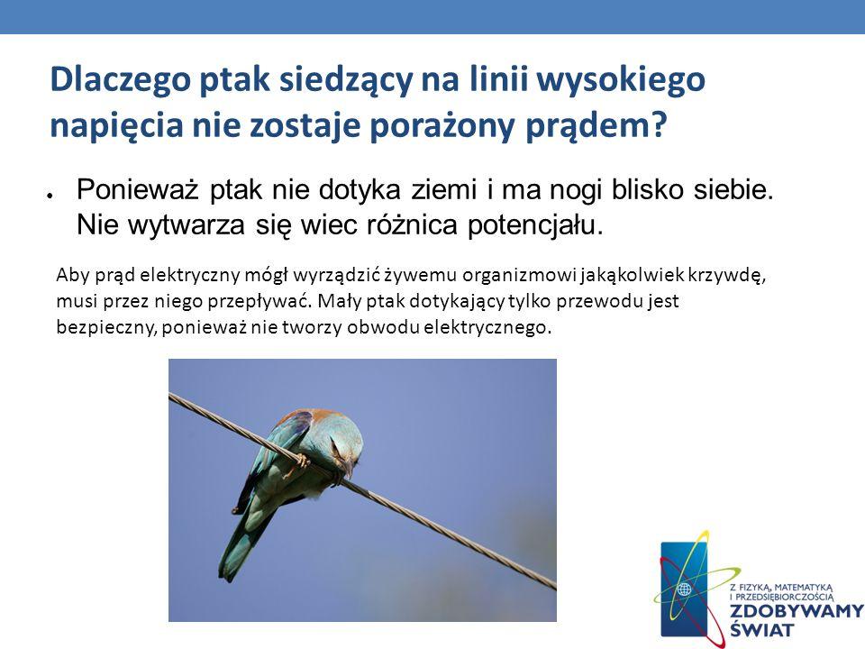 Dlaczego ptak siedzący na linii wysokiego napięcia nie zostaje porażony prądem