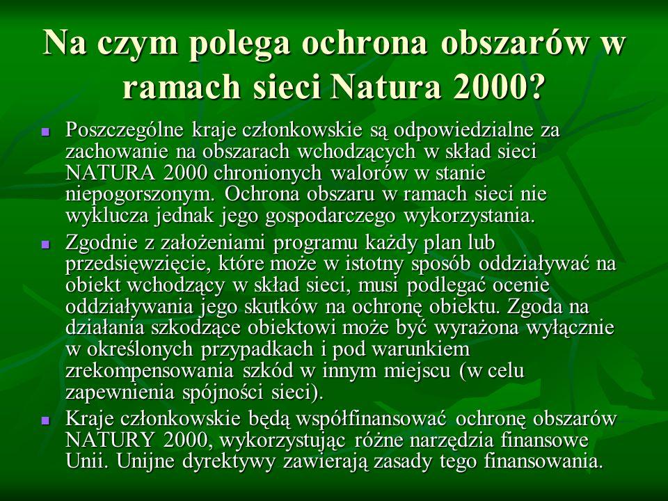 Na czym polega ochrona obszarów w ramach sieci Natura 2000