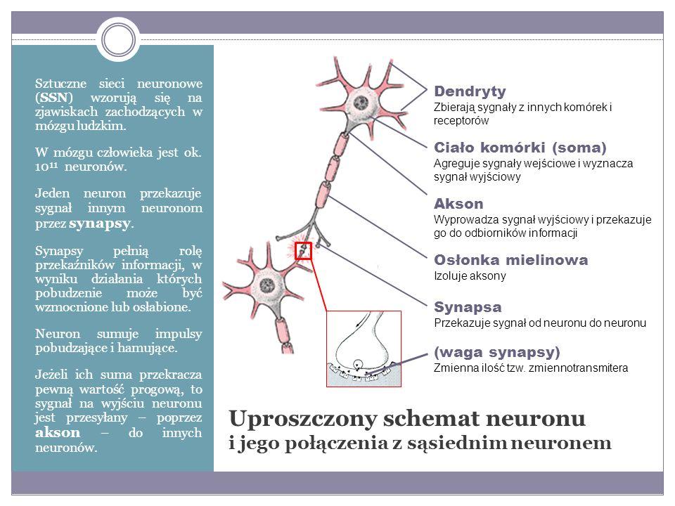 Uproszczony schemat neuronu i jego połączenia z sąsiednim neuronem