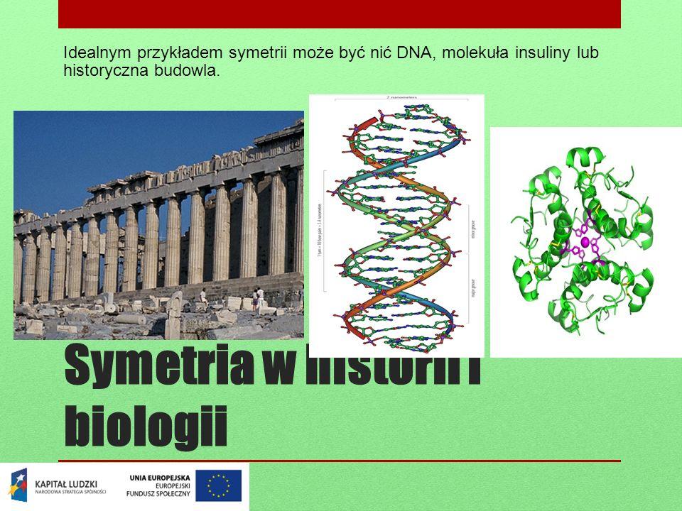 Symetria w historii i biologii
