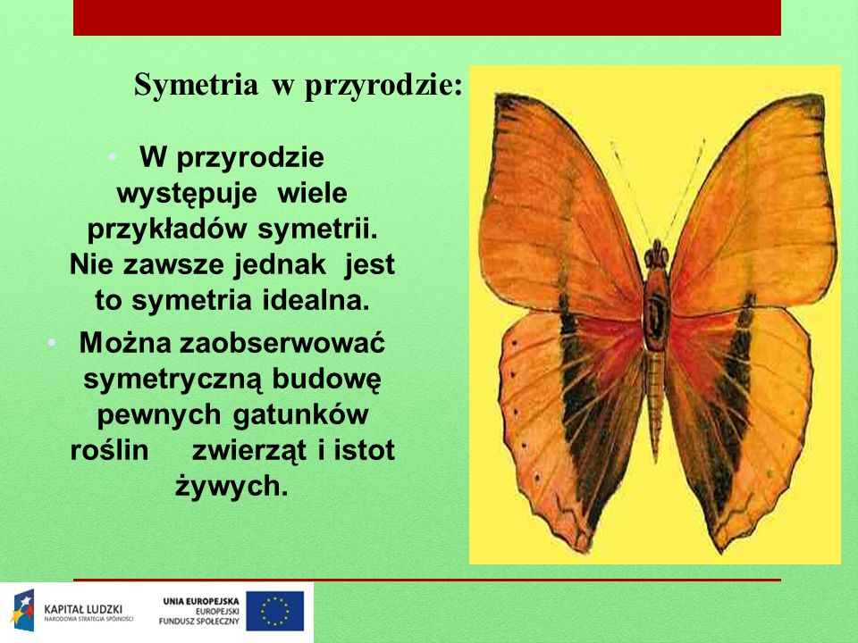 Symetria w przyrodzie: