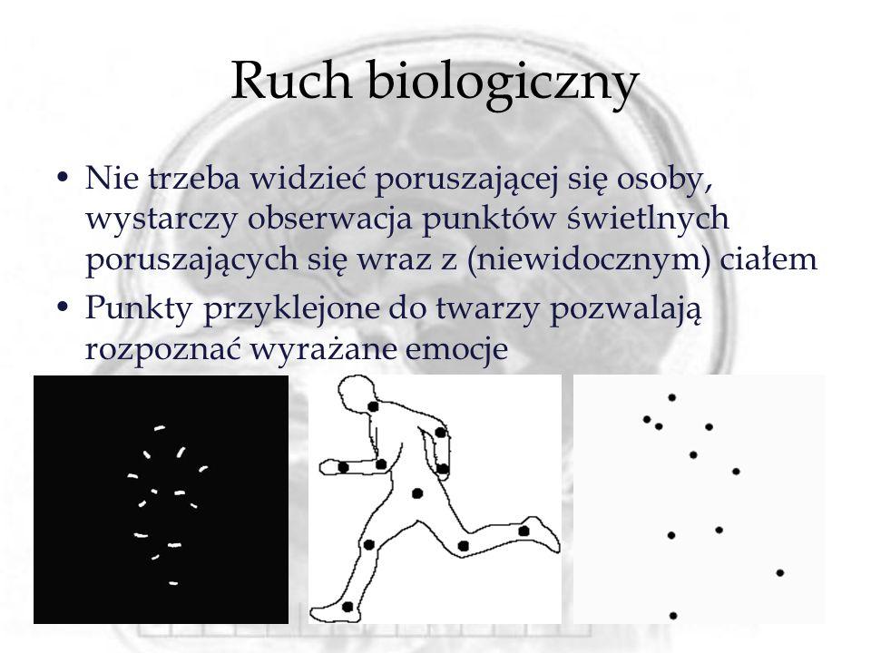 Ruch biologiczny Nie trzeba widzieć poruszającej się osoby, wystarczy obserwacja punktów świetlnych poruszających się wraz z (niewidocznym) ciałem.