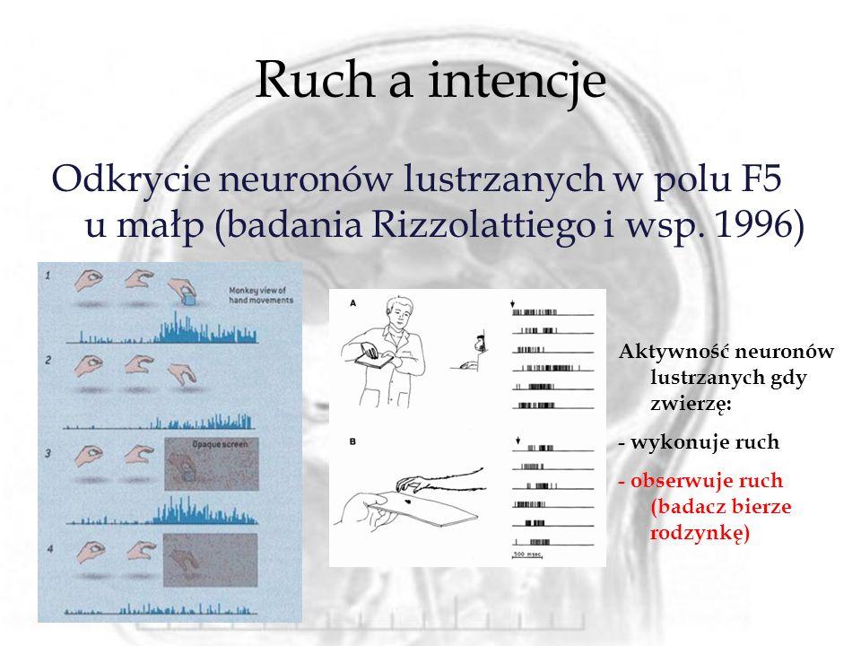 Ruch a intencje Odkrycie neuronów lustrzanych w polu F5 u małp (badania Rizzolattiego i wsp. 1996) Aktywność neuronów lustrzanych gdy zwierzę: