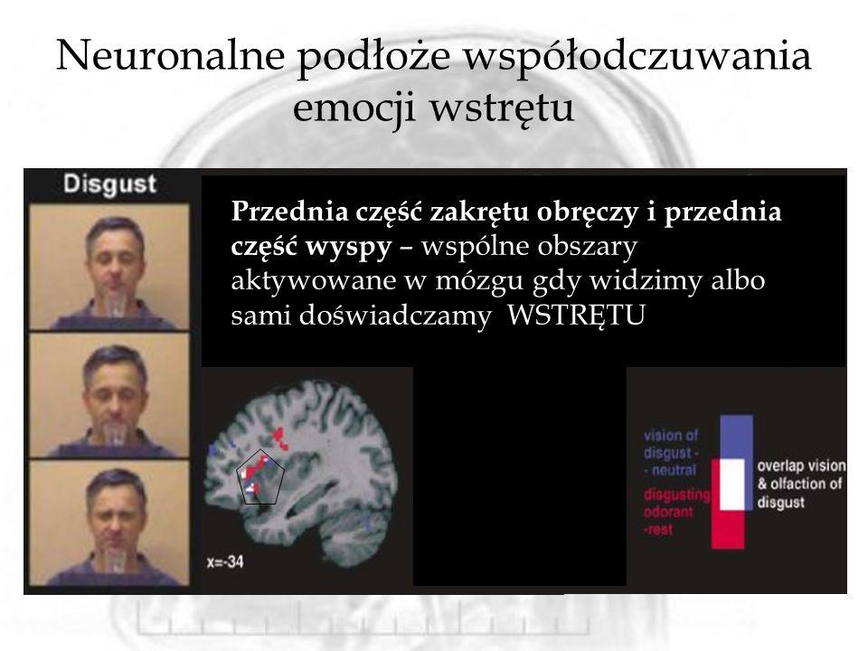Neuronalne podłoże współodczuwania emocji wstrętu