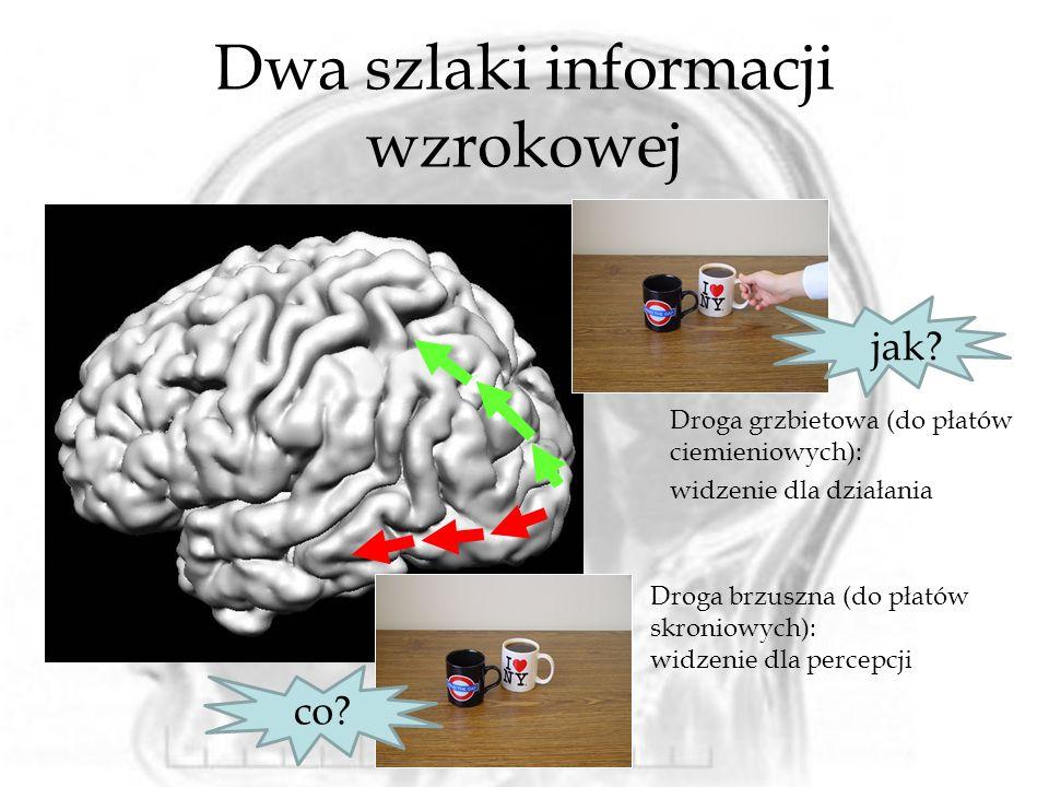 Dwa szlaki informacji wzrokowej
