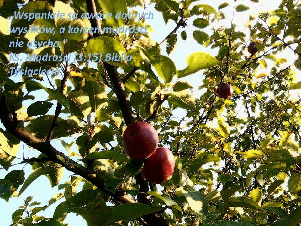 """""""Wspaniałe są owoce dobrych wysiłków, a korzeń mądrości nie usycha"""
