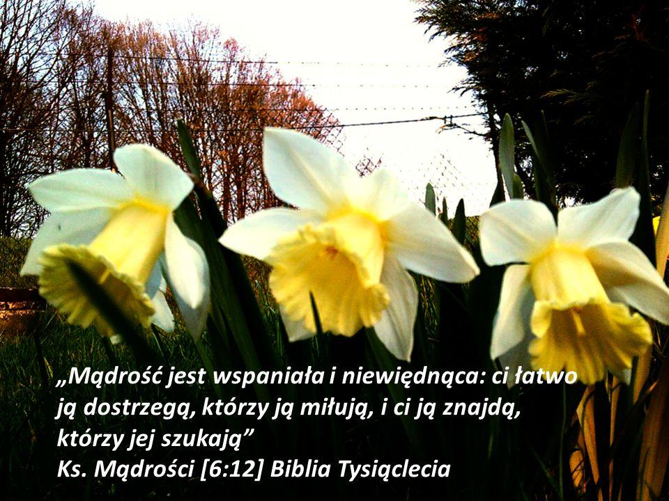 """""""Mądrość jest wspaniała i niewiędnąca: ci łatwo ją dostrzegą, którzy ją miłują, i ci ją znajdą, którzy jej szukają Ks."""