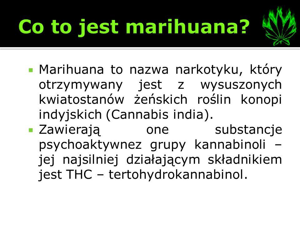 Co to jest marihuana