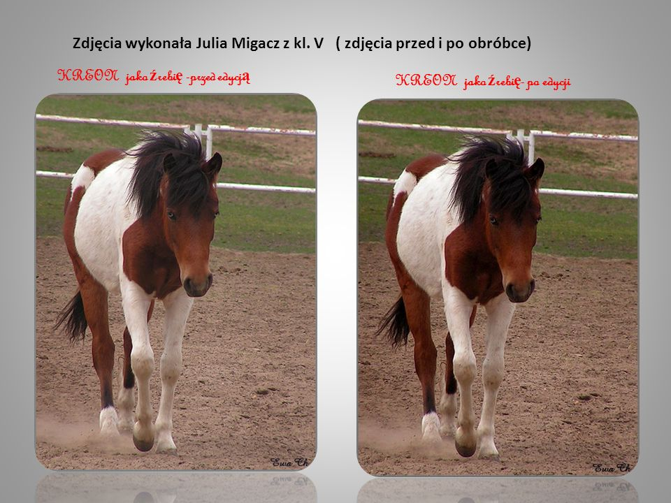 Zdjęcia wykonała Julia Migacz z kl. V ( zdjęcia przed i po obróbce)