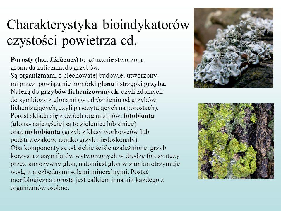 Charakterystyka bioindykatorów czystości powietrza cd.