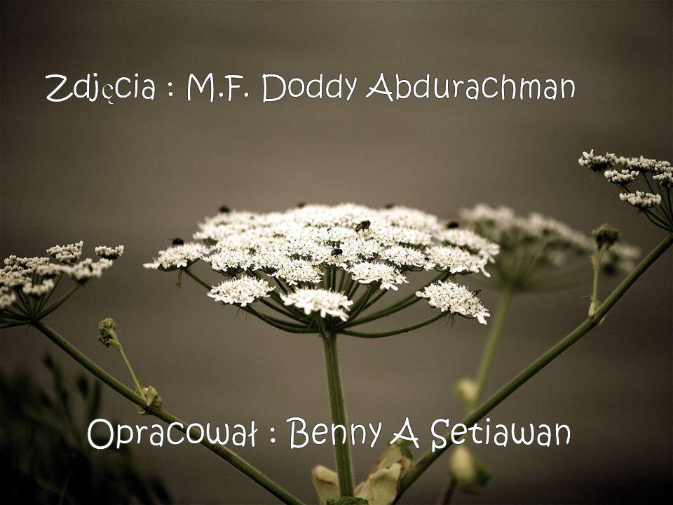 Zdjęcia : M.F. Doddy Abdurachman