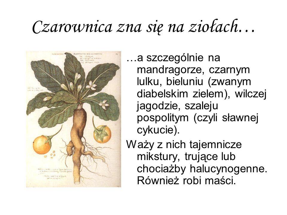 Czarownica zna się na ziołach…