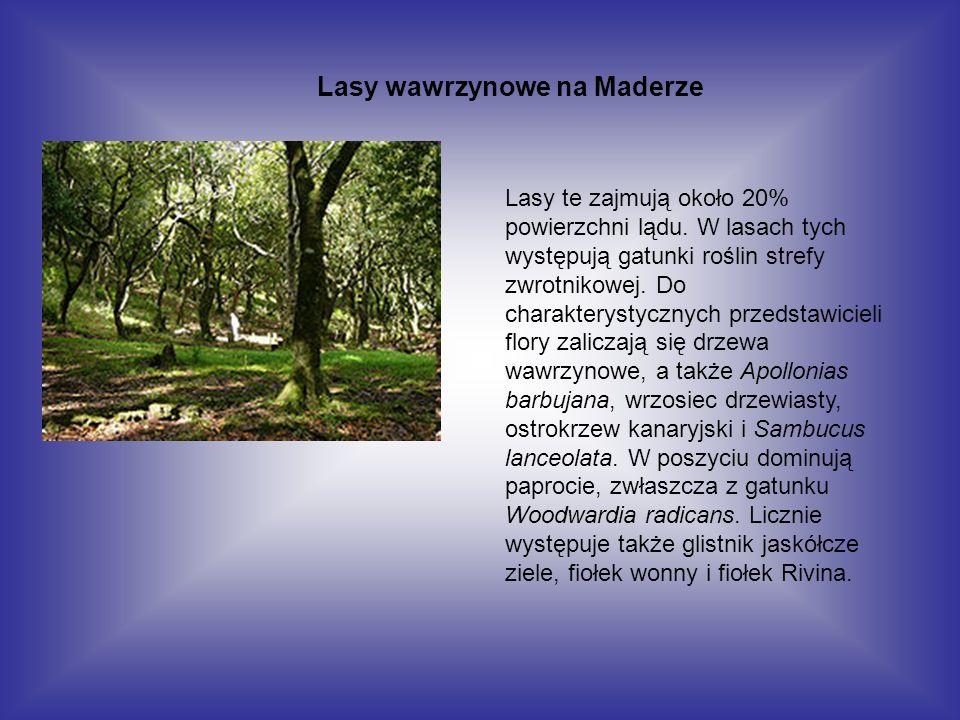 Lasy wawrzynowe na Maderze
