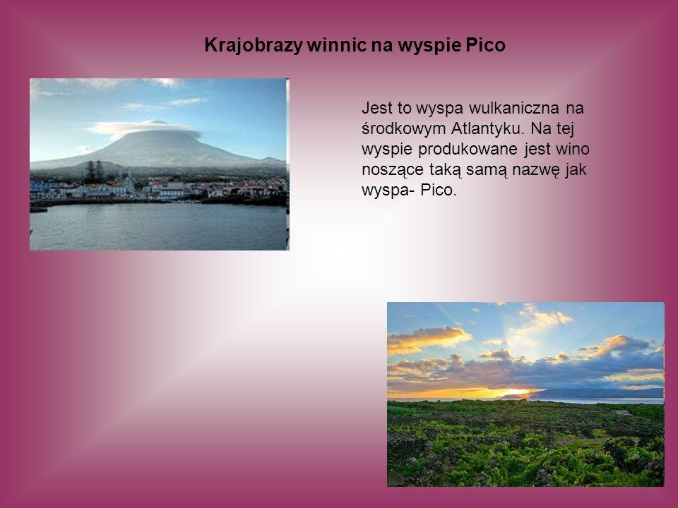 Krajobrazy winnic na wyspie Pico