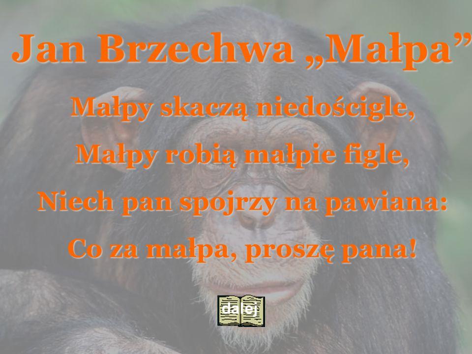 """Jan Brzechwa """"Małpa Małpa Małpy skaczą niedościgle,"""