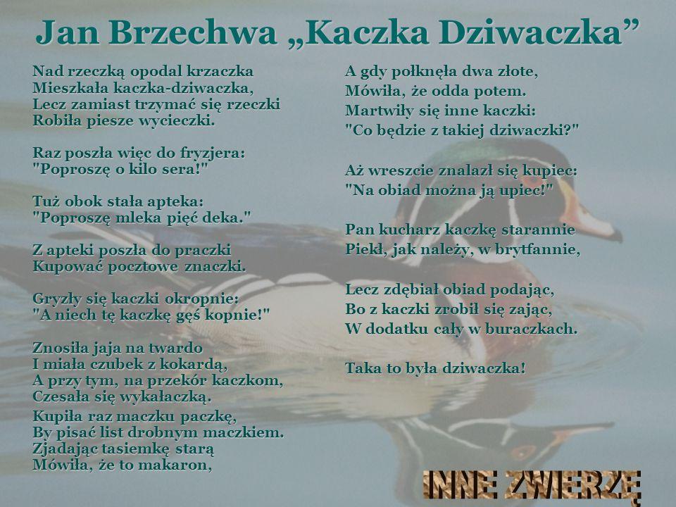 """Jan Brzechwa """"Kaczka Dziwaczka"""