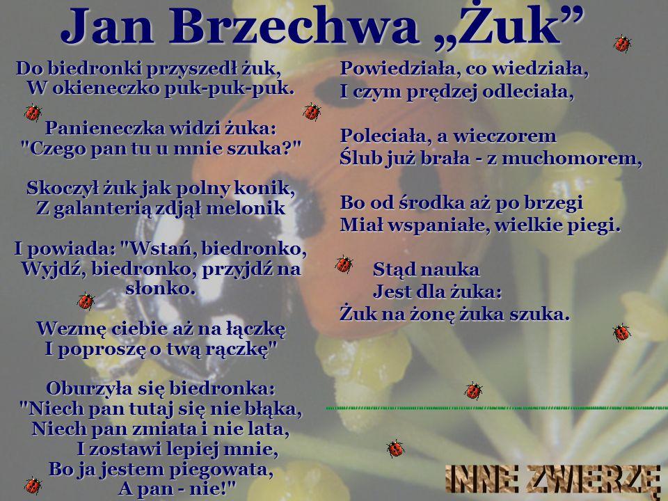 """Jan Brzechwa """"Żuk INNE ZWIERZĘ"""