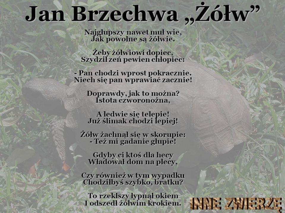 """Jan Brzechwa """"Żółw INNE ZWIERZĘ"""