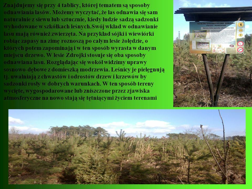 Znajdujemy się przy 4 tablicy, której tematem są sposoby odnawiania lasów.