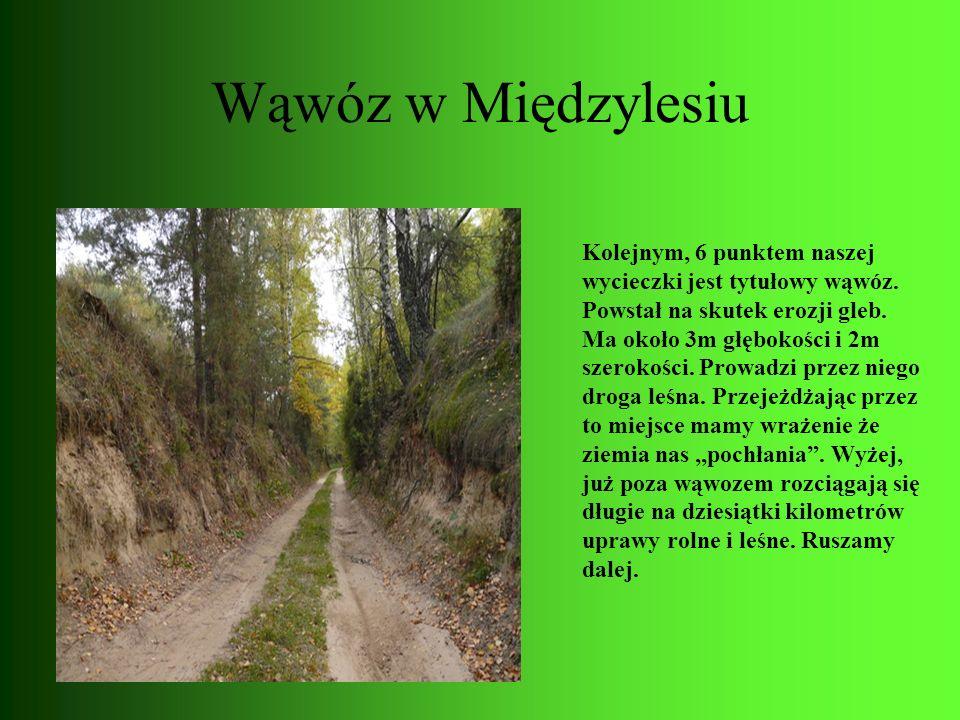 Wąwóz w Międzylesiu