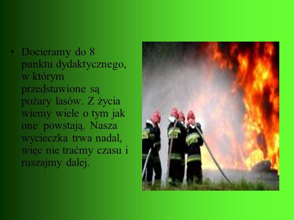 Docieramy do 8 punktu dydaktycznego, w którym przedstawione są pożary lasów.