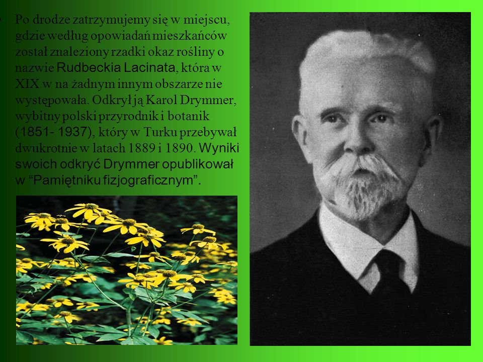 Po drodze zatrzymujemy się w miejscu, gdzie według opowiadań mieszkańców został znaleziony rzadki okaz rośliny o nazwie Rudbeckia Lacinata, która w XIX w na żadnym innym obszarze nie występowała.