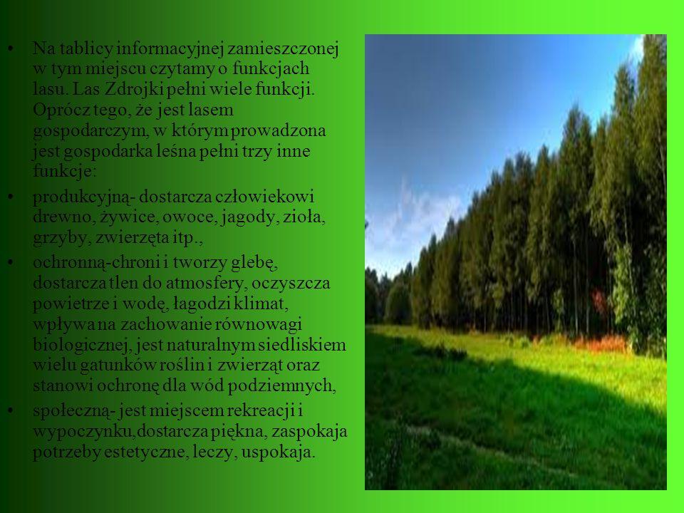 Na tablicy informacyjnej zamieszczonej w tym miejscu czytamy o funkcjach lasu. Las Zdrojki pełni wiele funkcji. Oprócz tego, że jest lasem gospodarczym, w którym prowadzona jest gospodarka leśna pełni trzy inne funkcje: