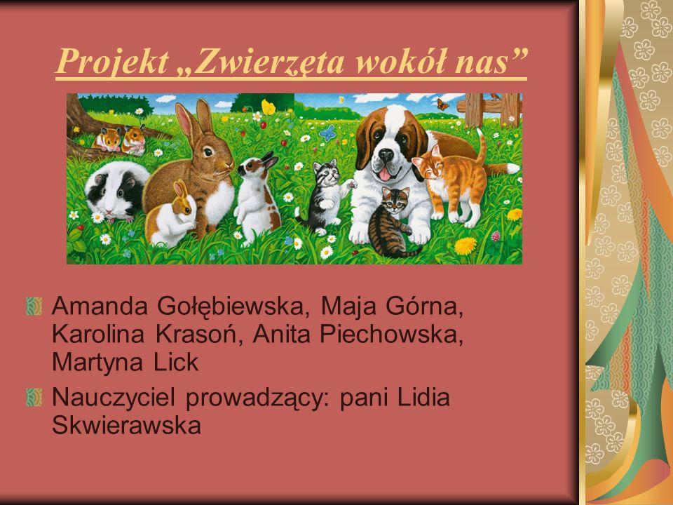 """Projekt """"Zwierzęta wokół nas"""