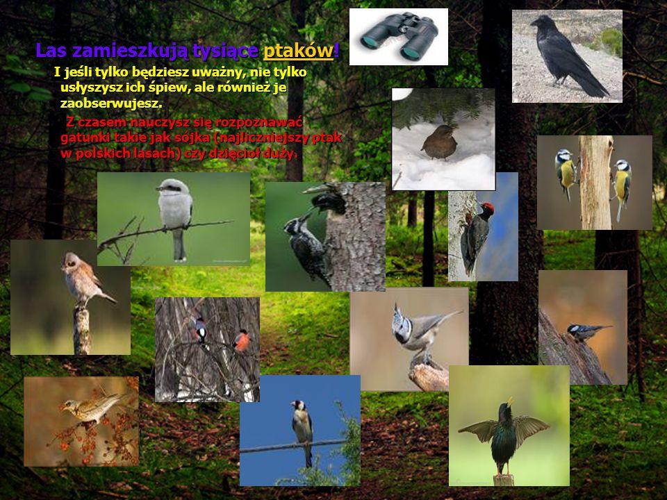 Las zamieszkują tysiące ptaków!